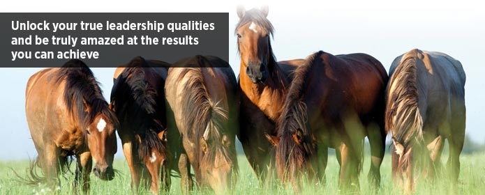 Equido Positive Leadership : Equine Leadership Programme